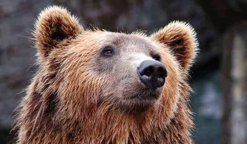 ポストペットの熊のイメージ